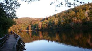 Ferienhaus: Rursee und Uferpfad