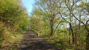 """Wanderweg am """"kleinen"""" Rursee"""