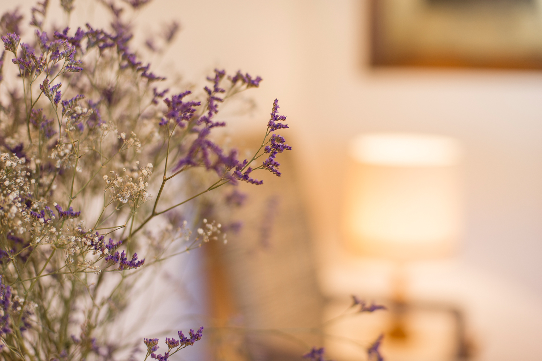 Trockenblumen im Wohnzimmer