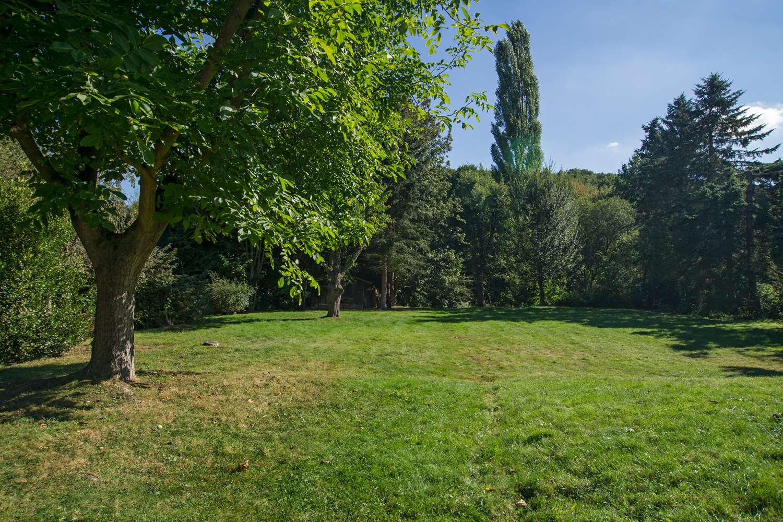 Bäume im Garten, hinten die hohe Pappel