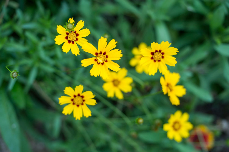 Blumenbeet am Haus