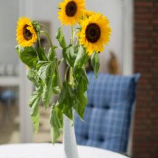 Lastminute Sommer-Angebot: 8 für 7