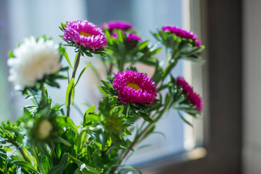 Blumen im Badezimmer