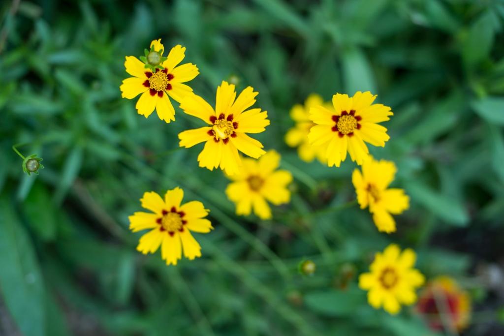 Blumen im Vorgarten