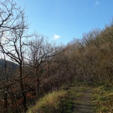 Herbstwanderung: auf dem Meuchelberg