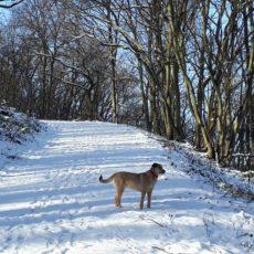 Lola im Schnee auf dem Meuchelberg