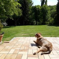 Eifel im Mai: Lola sonnt sich auf der Terrasse