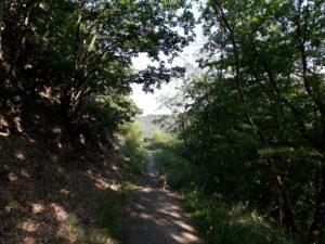 Eifel im Mai: Schattiger Wanderweg auf dem Meuchelberg mit Hund